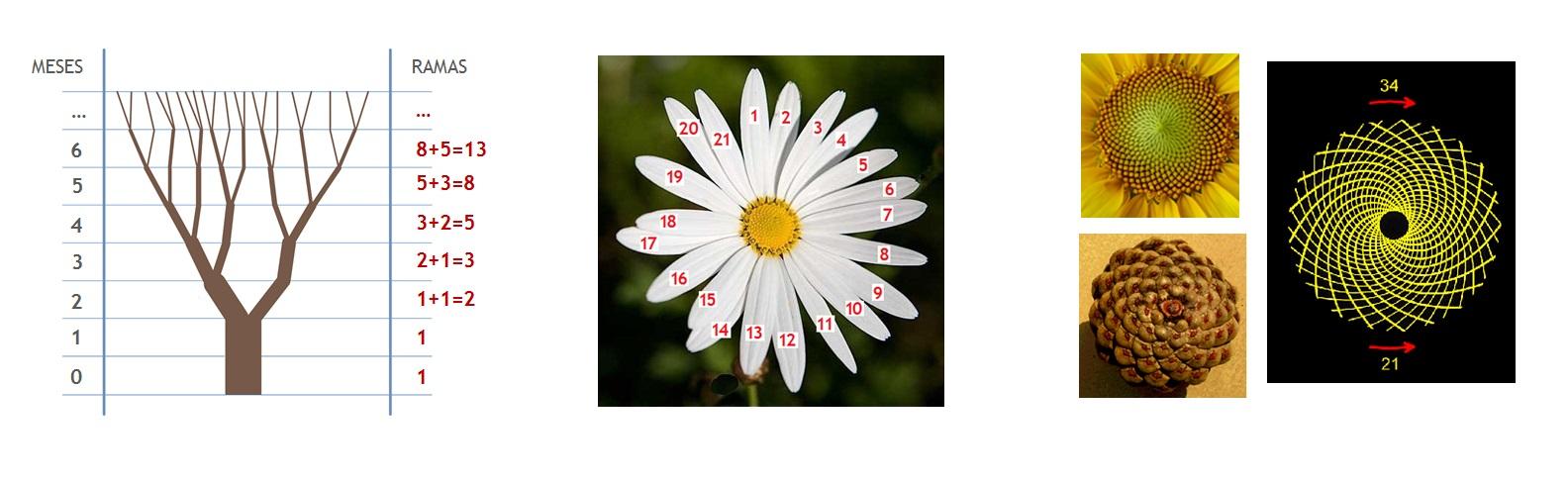 fibonacci-blog